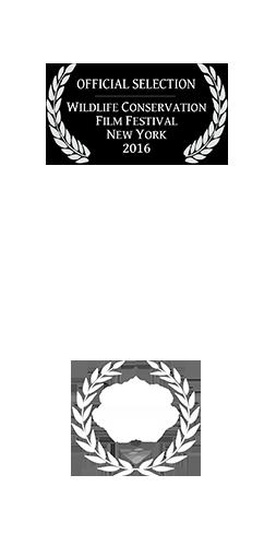 Tastyshots-film-award-carousel_08