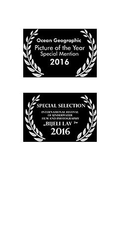 Tastyshots-film-award-carousel_09